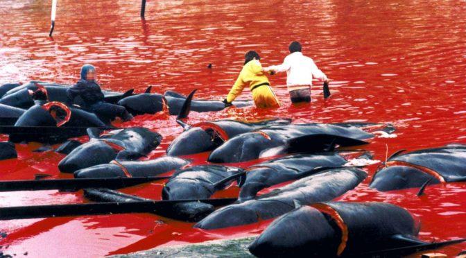 Animalismo, antiespecismo y ecología desde una perspectiva marxista
