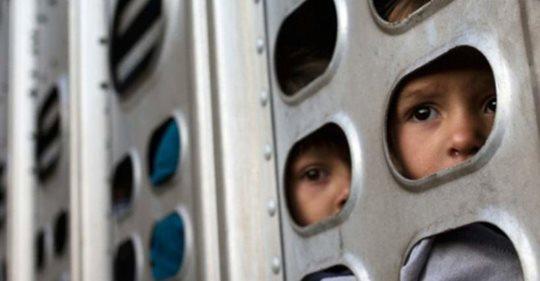 Niños migrantes transportados como ganado en furgones de EEUU