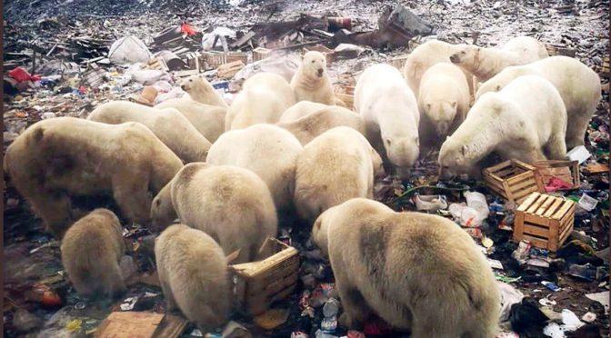 XIII Tesis sobre la catástrofe (ecológica) inminente y los medios (revolucionarios) de evitarla