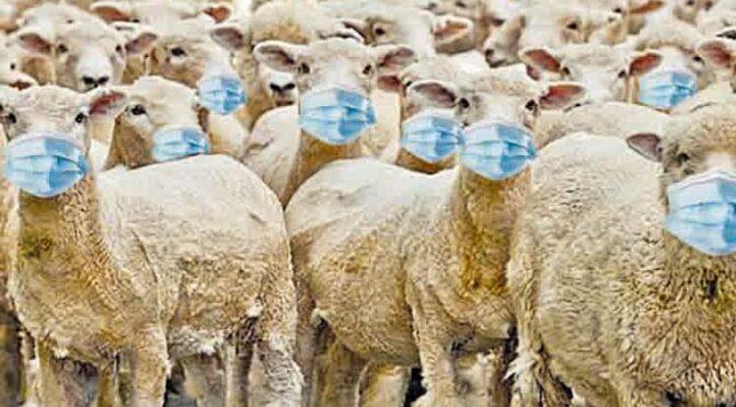 La pseudociencia asesina de la «inmunidad del rebaño»