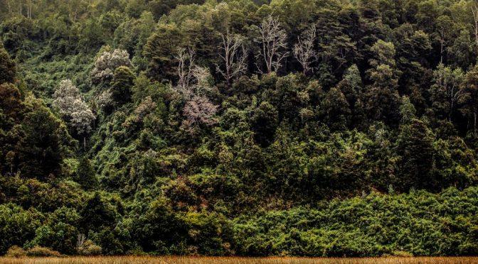 Fotografías de Mario Aguirre Montaldo: «Cuando los ríos tejen territorio»
