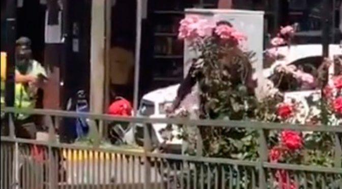 Frente al asesinato del malabarista:  Panguipulli nos muestra el camino, hay que recuperar las calles