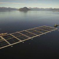 Greenpeace desmiente versión de la industria salmonera sobre nueva contaminación de aguas en fiordos australes